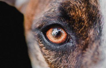 Esme Rennie Dog Photography