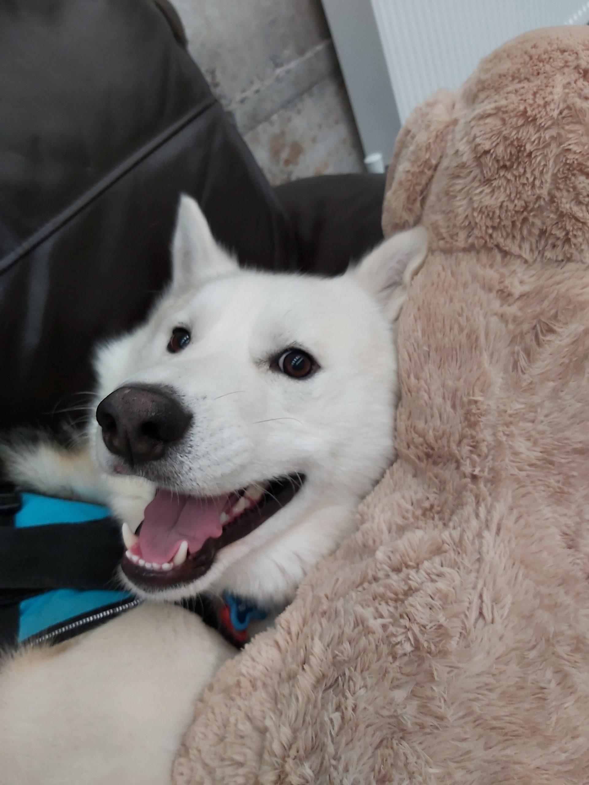 Fluffy Paws Doggie Daycare Ltd