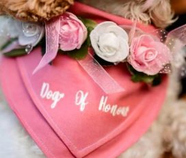 Wedding Dog Wear, Occasions & Gift Sets